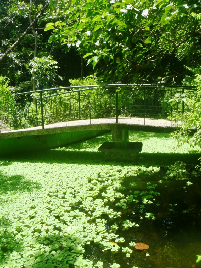 Bridge over a pond
