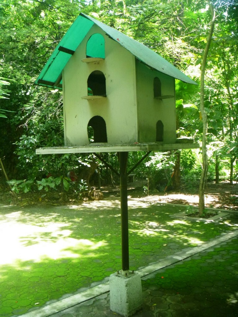 A man-made home for the birds