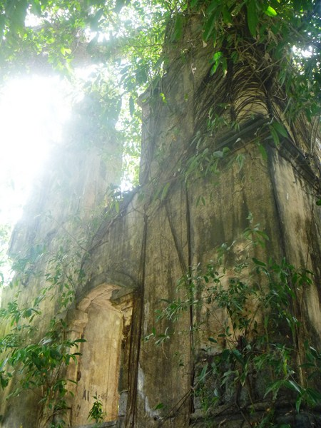 A balete tree slowly strangling the walls