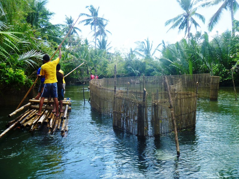Negotiating a bamboo fish trap