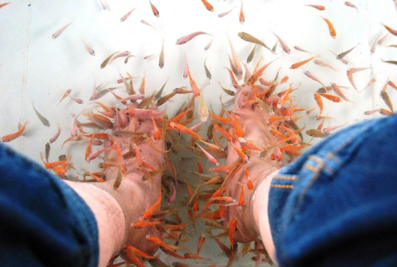 TerraFish feasting on my dead skin