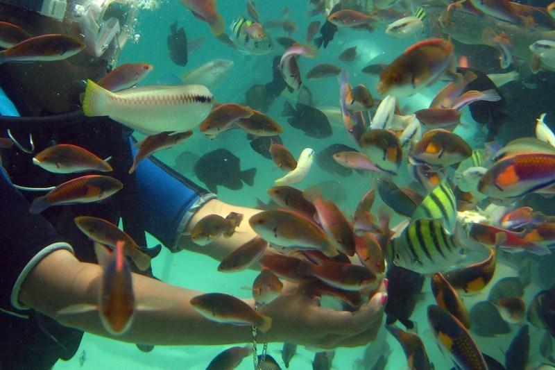 Scuba diving at the marine sanctuary