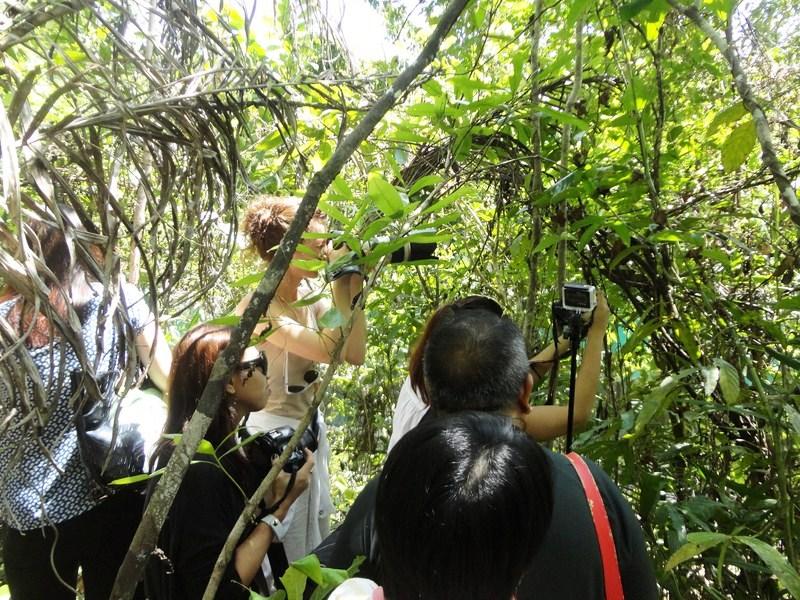 Taking turns potographing the tarsier