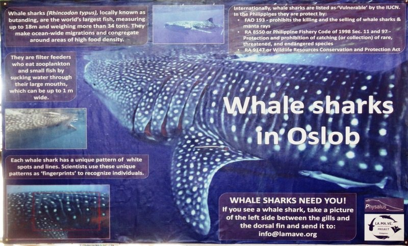 Facts about the whale shark