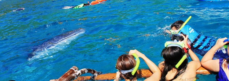 The author's (upper right) close encounter with a whale shark (photo: Ma. Joy C. Felizardo)