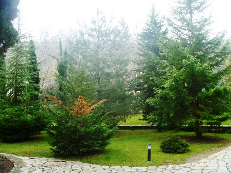 The well-kept garden with cypress trees