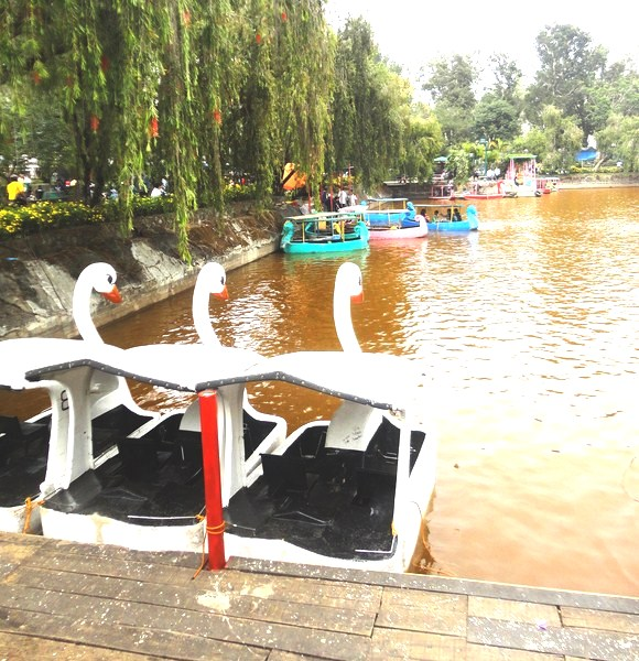 Swan boats at Burnham Lake
