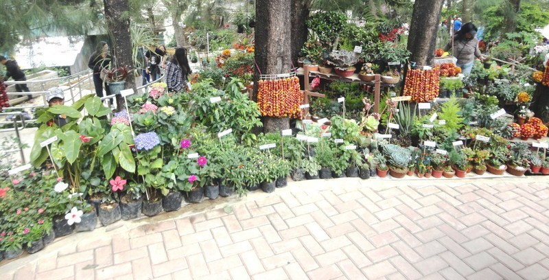 Plants and flowers for sale along the walkway