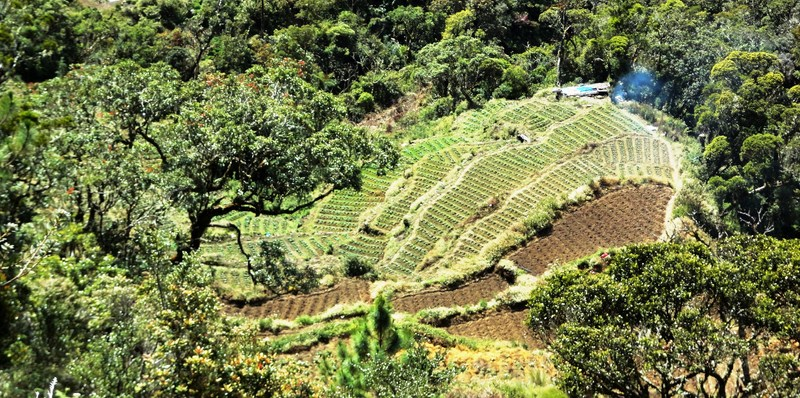 Vegetable terraces