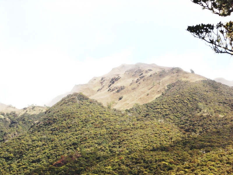 View of the so-far unreachable summit of Mt. Pulag at Camp 1