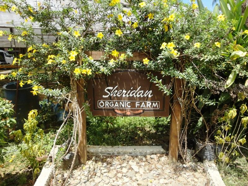 Sheridan Organic Farm