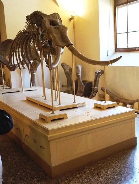 A mastodon skeleton