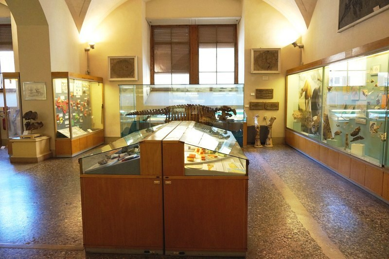 museum-of-natural-history-2