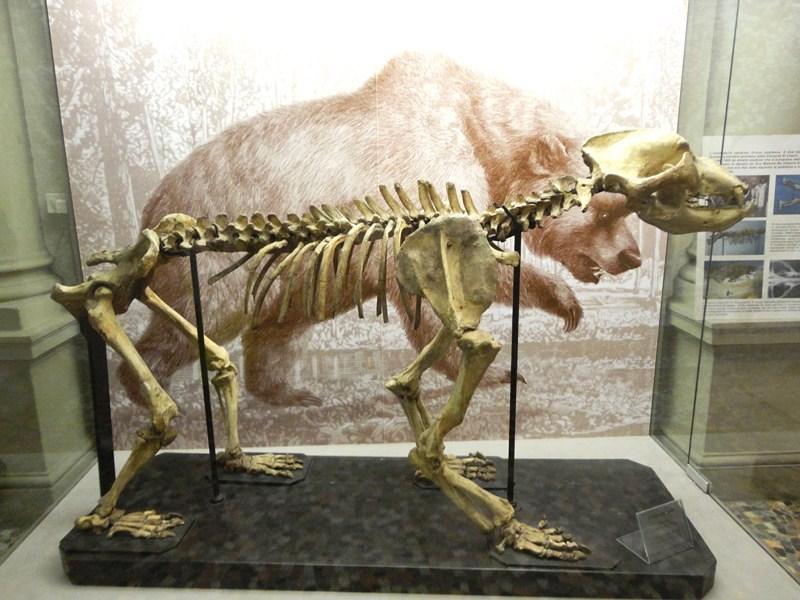Ursus etruscus
